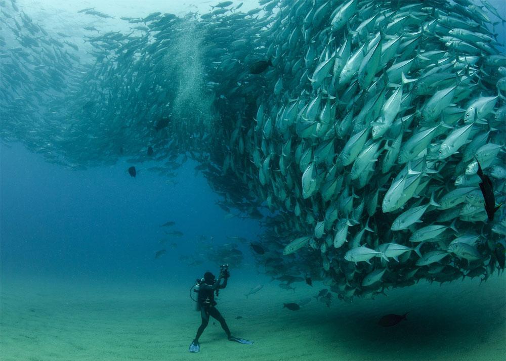 Octavio Aburto, National Geographic