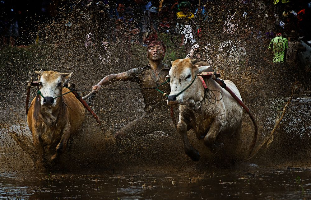 Pacujawi @ Bull Race  by  mohd irman ismail