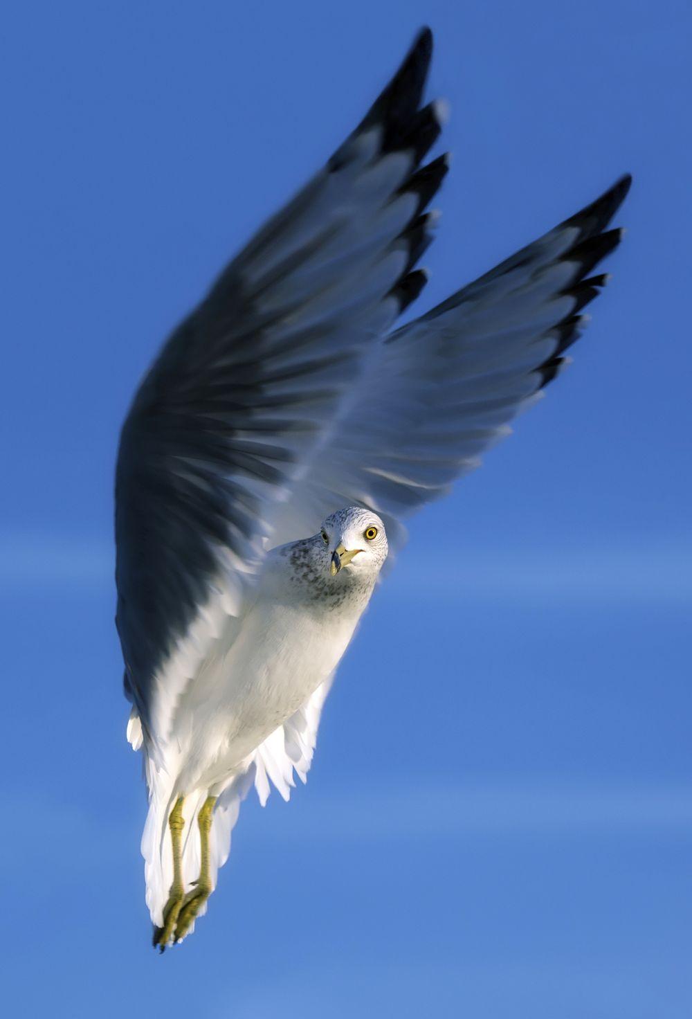 Seraphim   by J. Goodman