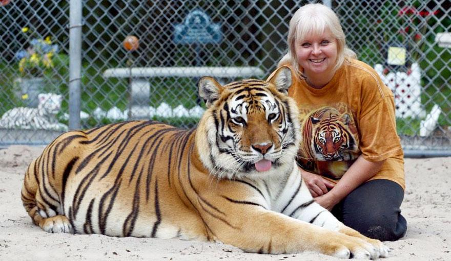 pet-tigers-janda-saber-janice-haley-1