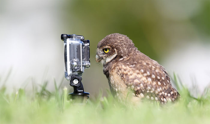 Animals-Getting-Cozy-with-Camera-Gear2