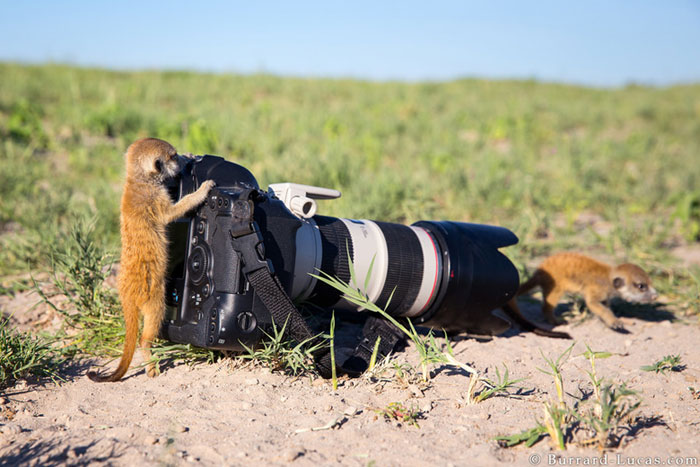 Animals-Getting-Cozy-with-Camera-Gear1